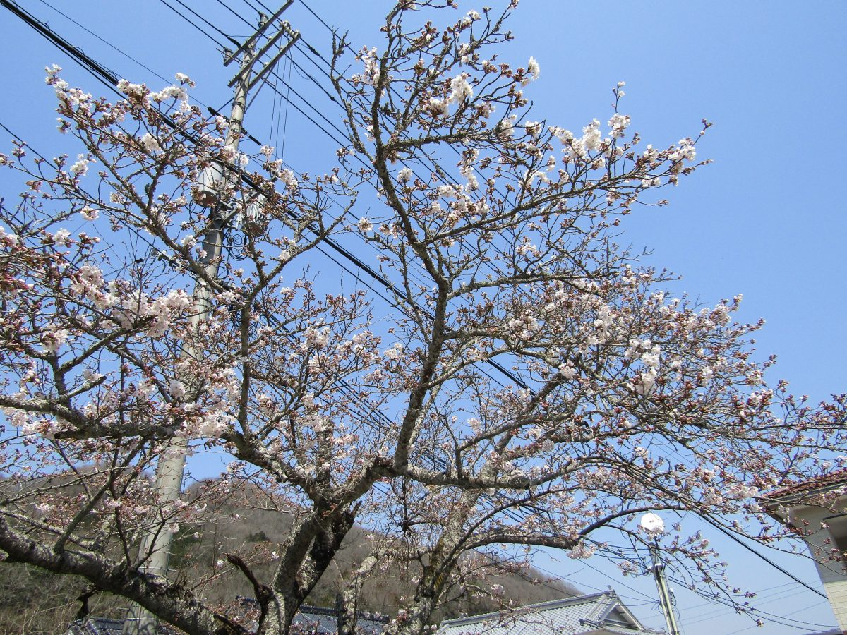 新しい春の訪れ