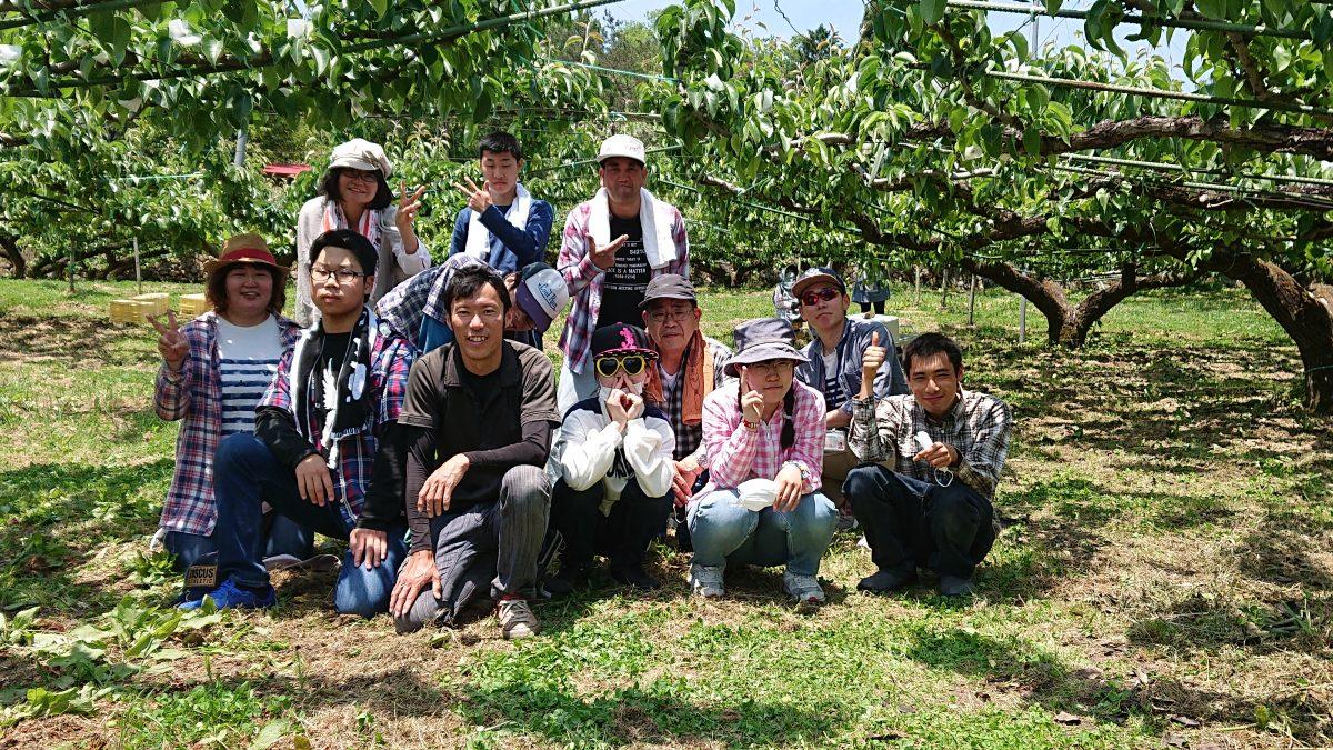 安芸高田市へ梨の小袋掛け体験へ